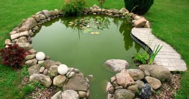 kolam ikan sederhana di rumah