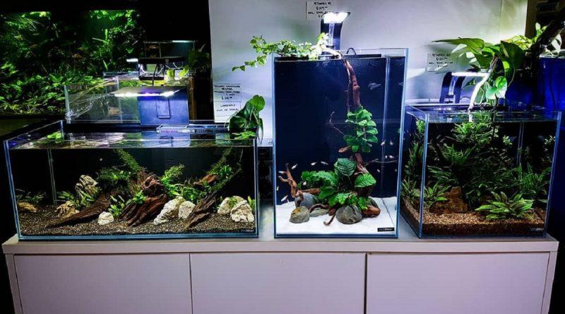 Meja Aquarium Archives Blog Qhomemart