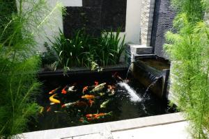 8 desain kolam koi terbaik untuk hunian anda - blog qhomemart